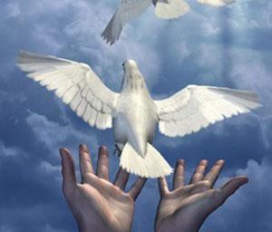 Hands release 1 dove